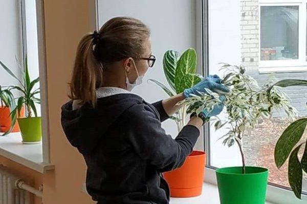 «Растениеводство» (трудовая мастерская)